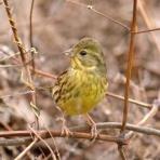 Tokyo_wildbirdpark_blog