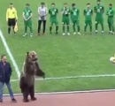 <怖すぎる!>熊がピッチに登場し審判にボールを手渡し。英動物愛護団体が警鐘「危険だ」「非人道的」