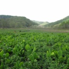『ハイキング~斑尾高原・沼ノ原湿原~再訪』の画像