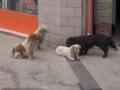 【画像】中国の野良犬шшшшшшшшшшшш