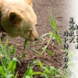 『見兔放犬』の画像