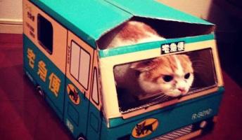 【衝撃事実】猫は人間の気持ちを理解してる事が判明 / 猫を科学的に実験して判明したこと7つ