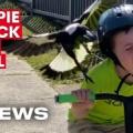 鳥が襲撃し赤子死亡 オーストラリア