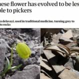 『人間の採取に対抗して色を変えた植物』の画像