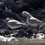 東京港野鳥公園 レンジャーブログ
