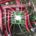 『2月10日放送「トラさんの不思議体験紹介」ほか』の画像