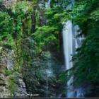 『2020年8月10日:猛暑日に涼を求めて箕面大滝へ』の画像