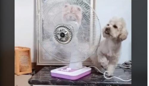 賢いワンコが自分で暑さ対策をしてしまうTikTok映像が話題に