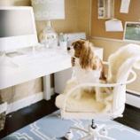 『犬と暮らす!海外の素敵なインテリア画像まとめ 1/3 【インテリアまとめ・画像 部屋 】』の画像