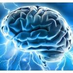 脳とかいう自分のものなのに意味不明な器官
