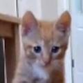 【子ネコ】 部屋の中でスケボーを押してみた。ちょっと待ったぁ! 子猫がやってくる → こうなります…