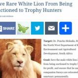 『貴重なホワイトライオン「ムサファ」を助ける署名』の画像