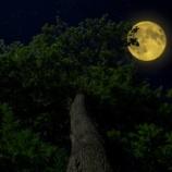 『月の謎 なぜ月は地球に裏側を見せないように回っているのだろうか』の画像