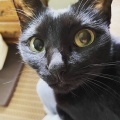 黒猫(もずく)と黒猫(あずき)