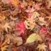 紅葉の天城路トレッキング