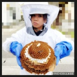 『オオスズメバチ駆除案件vol.3』の画像