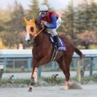 『【金沢・JBCイヤー記念結果】ハクサンアマゾネスが断然人気に応え4馬身差V』の画像