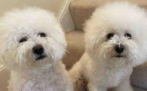 双子の犬を比較してみると
