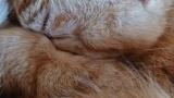 ワイ、猫が1ヶ月ぶりに帰ってきてガチの号泣(※画像あり)