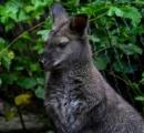 オーストリアの野原でカンガルーが発見される