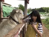 【乃木坂46】与田ちゃんは人間だけじゃなくヤギにまで食べれそうと思われちゃうんだね~