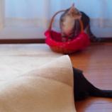『我が家のアマテラスオオミカミ(♂だけど)』の画像