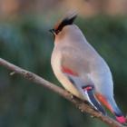 『投稿:BORG89EDによる野鳥6態 2021/02/13』の画像