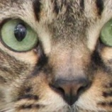 『ネコモルビリウイルス感染症』の画像