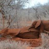 『ある仔象の話』の画像