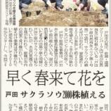 『神保国男・戸田市長が今年もサクラソウの植苗をされました(埼玉新聞)』の画像