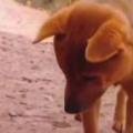 【イヌ】 ニワトリの親子がいた。そこに犬がやってくる。どうなるの? → 犬はこうなった…