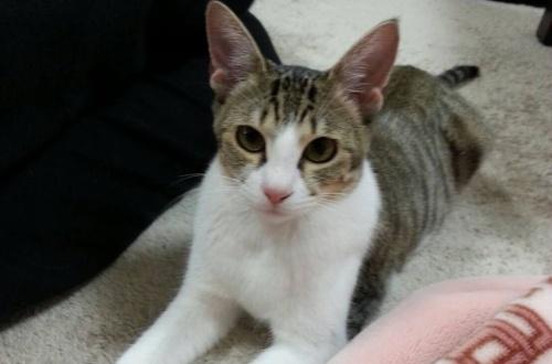 【動画】うちの猫がなんか変なんだけどのサムネイル画像