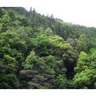 『コウモリのいる森』の画像