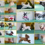 『飛行犬撮影会のお写真が届きました!』の画像