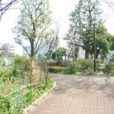 2009年4月 新宿区で山菜採りのサムネイル