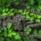 『植物は水との接触で防衛反応を示す』の画像