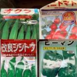 『ベランダ菜園で野菜作りを実践中 ①』の画像