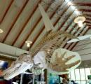 恐竜の発見以前の中世のドラゴンが恐竜みたいな見た目しているのは不思議←これ