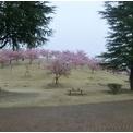 伊勢崎市市民の森公園は雨でした。
