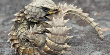 【悲報】日本人密猟者さん、一匹30~100万円で取引される激レア生物を乱獲してしまい禁固13年www