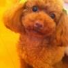 篠田麻里子の愛犬パチャが死去