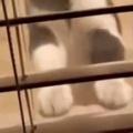 近所のネコに一度だけ食べ物をあげた。こんにちは~♪ → 今日もこんな感じです…