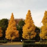 『木枯しが吹き、そろそろ冬支度の頃かもしれません』の画像