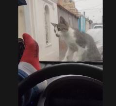 外国人「ボンネットに乗った猫を驚かせようとした結果...」【海外の反応】