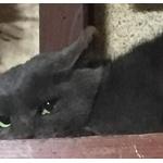 野良猫が家に侵入してきた(´;ω;`)