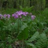 春の花   2010/05/31 8:18のサムネイル