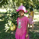 『日曜日の収穫(ボランティアのみなさんと共に) ~虹の学校からの便り~』の画像