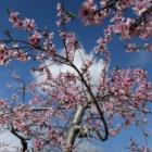 『桜が散って』の画像