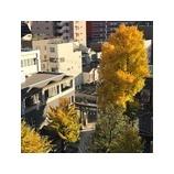 『色づく秋、いやもう冬』の画像