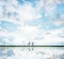 鳥取、 雨あがりの水田がまるで「ウユニ塩湖」のような美しさ